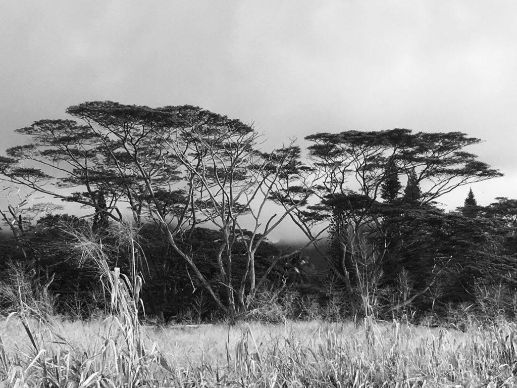 Black and White Hawaii